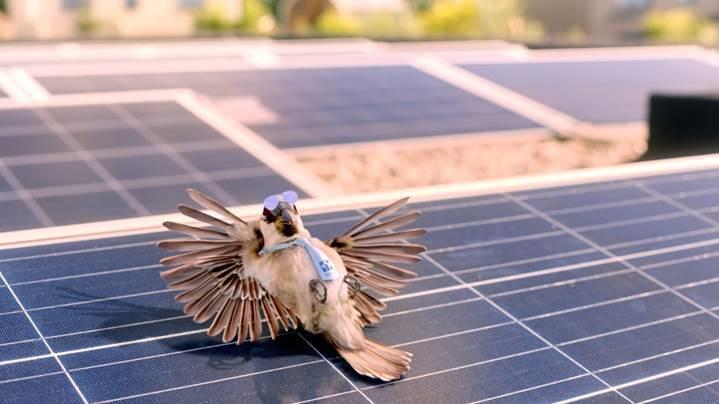 Steenhuis Makelaars energielabel